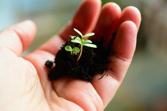 sadba rostlin