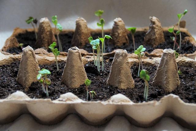 Klíčení semen vás bude bavit!